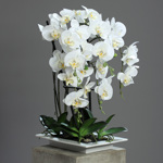 Orhidee artificiala alba in ghiveci ceramic - 62 cm